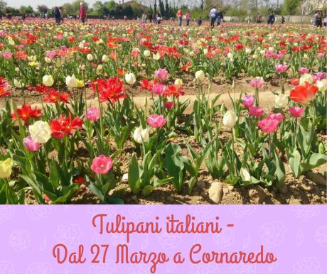 Tulipani italiani - Cornaredo.png